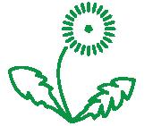 GU – Dandelion